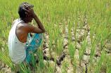 "Video: ઉત્તર ગુજરાતના ખેડૂતોનો મૂક સવાલ ""વરસાદ તું કેમ ના આવ્યો ?"""