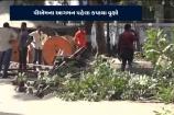 VIDEO: પી.એમ. મોદી ની મુલાકાત ને લઈ ને વૃક્ષો નું કાઢવામાં આવ્યું નિકંદન