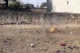 અમરેલી: સાવરકુંડલાના આંબરડી ગામ પાસે 4 સિંહે 9 ગાયોનું મારણ કરતાં ગામલોકોમાં ફફડાટ