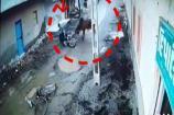 જેતપુરમાં આખલાનો ત્રાસ, રાહદારીઓ પર કર્યો હુમલો