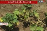 Video: સાબરકાંઠાના ખેડૂતોની વ્યથા, દૂષિત પાણી બાળી રહી છે અમારી ખેતી!
