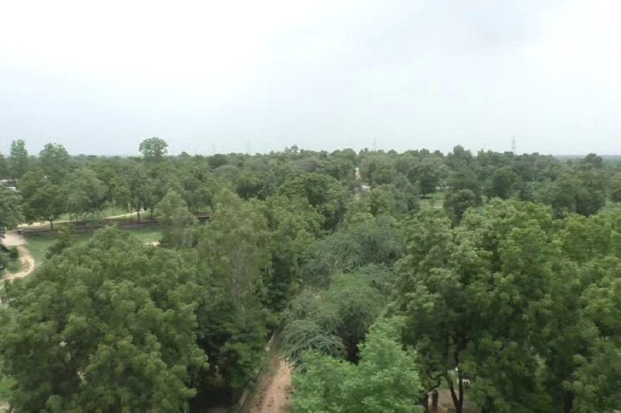 ગામમાં એક પણ ખુલ્લી જગ્યા એવી નથી કે જ્યાં વૃક્ષ જોવા ન મળે આ અંગે ગામના લોકો કહે છે કે ગ્રામજનોને વૃક્ષ પ્રેમ વારસામાં મળ્યો છે. અમે ક્યારેય વૃક્ષારોપણનું અભિયાન ચલાવાયું નથી. નવાઇની વાત તો એ છે કે, ગ્રામમાં ક્યારેય બિનજરૂરી વૃક્ષ છેદન થતું નથી. જો કોઇ વૃક્ષ નડતરરૂપ હોય કે જોખમી હોય તો તેને જ કાપવામાં આવે છે. અને તેની સામે કપાયેલા એક વૃક્ષ સામે નવા 4 વૃક્ષો ઉછેરાય છે.