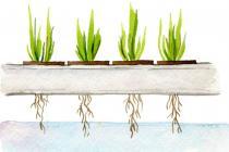 માટી વગર કરો ખેતી, ઘરે બેસી આ Businessથી કરો અઢળક કમાણી