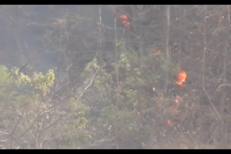 પંચમહાલઃ પાવાગઢ નજીક ભાટ ગામ પાસે જંગલમાં આગ, વનવિભાગ આગથી અજાણ