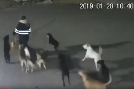 11 કૂતરાઓએ મહિલા પર હુમલો કરી ફાડી ખાધી, મોતનો દર્દનાક Video